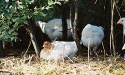 KemperKip wil stallen bouwen voor biologische vleeskippen